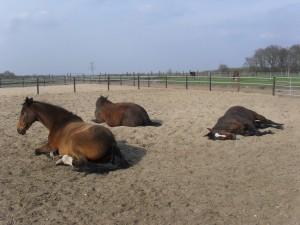 Paardenpension Groepsstal