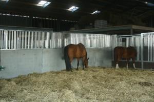 Paardenpension groepstal binnen