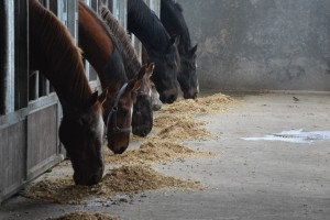speciale verzorging voor kwetsbare paarden