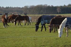 Paarden verzorging specials