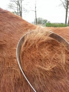 Paarden verzorging poetsen