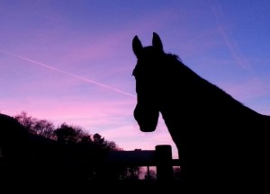 Afscheid paard laten inslapen