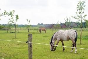 paardenhotel de wildtshof